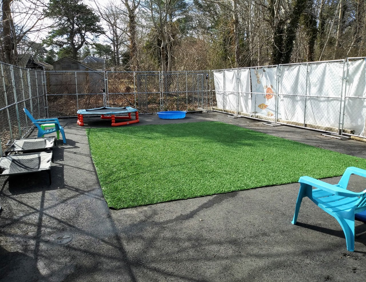 Doggy Daycare and Boarding Outdoor playground contains artificial turf wading pool chairs cots and trampoline